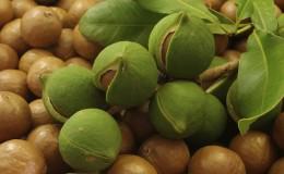 Comment faire pousser de la macadamia aux noix à la maison