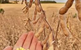 Caractéristiques et description de la prudence du soja