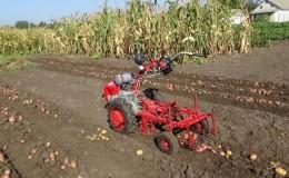 Come scavare patate con un trattore con guida da terra