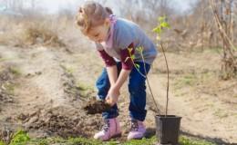 Guide du débutant pour planter des amandes à l'automne