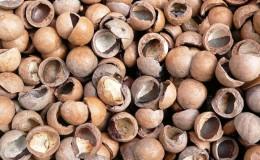 Coquilles de noix de macadamia - propriétés et utilisations bénéfiques