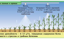 Qual è l'alimentazione fogliare del grano e quali fertilizzanti possono essere utilizzati per questi scopi
