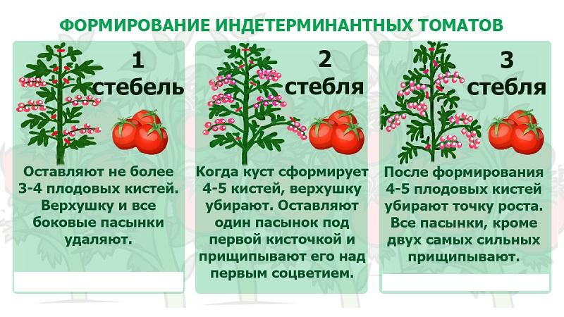Rendement stable et résistant aux maladies Bison à sucre de tomate: caractéristiques et description de la variété