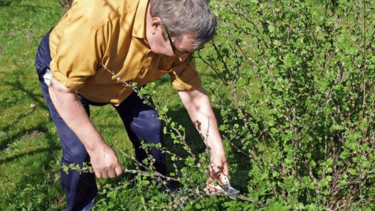 Mikor kell alkalmazni a tavaszi gyepműtrágyát?